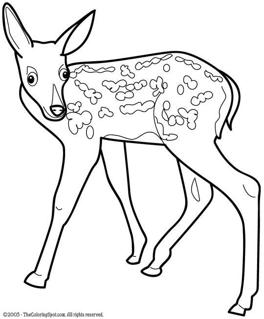 Animale Furnicutele 2012 2013